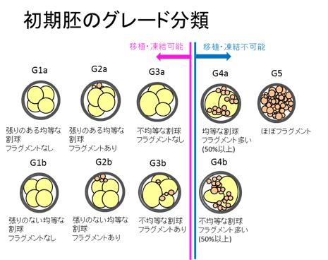 胞 ブログ 移植 盤 胚 移植